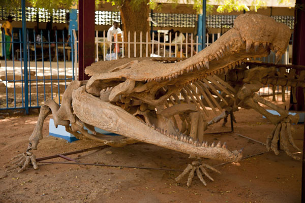 Foto van Skeleton of ancient crocodile on display in the dinosaur sectionNiamey - Niger