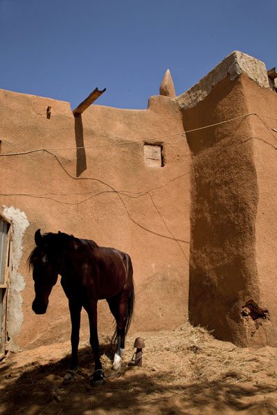One of the horses of the Sultan | Zinder Sultan Palace | Niger