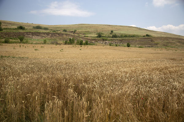 The ruins of Stibera lie beyond this field - 马其顿王国