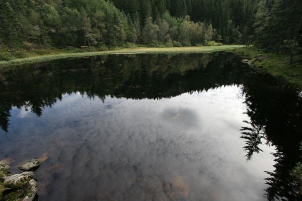 Trees reflected in small lake behind Mount Fløyen | Mount Fløyen hiking | Norway