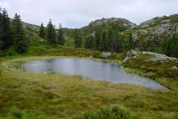 Small lake in the nature area behind Mount Fløyen | Mount Fløyen hiking | Norway