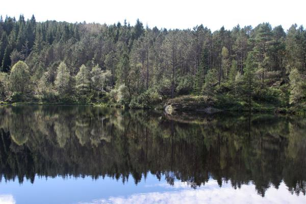 Trees reflected in a lake | Mount Fløyen hiking | Norway