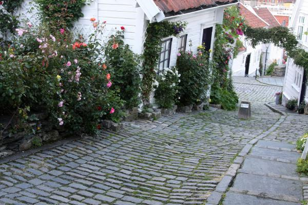 Picture of Old Stavanger (Norway): Cobble-stone street with white houses near the harbour, Vågen