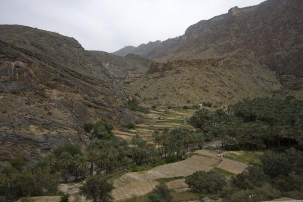 Picture of Trees and terraced fields surrounded by mountains near Bilad Sayt
