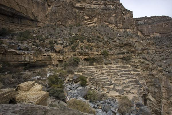 Terraces near Sap Bani Khamis | Jebel Shams Grand Canyon | Oman