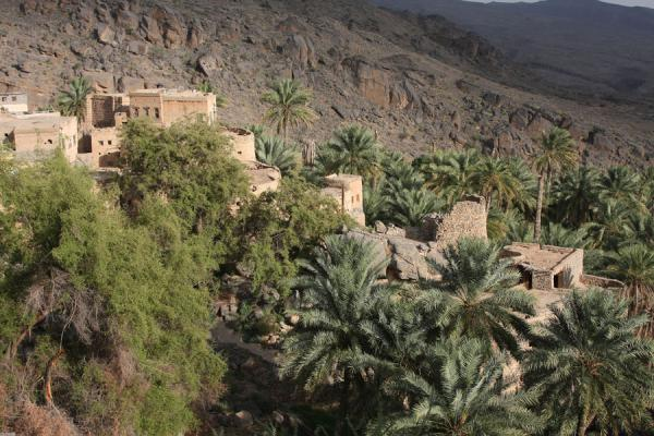 Picture of Misfat (Oman): Ancient houses of Misfat blending in with the date plantations