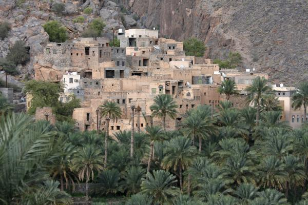 Picture of Misfat (Oman): Houses of Misfat clinging to the rocks
