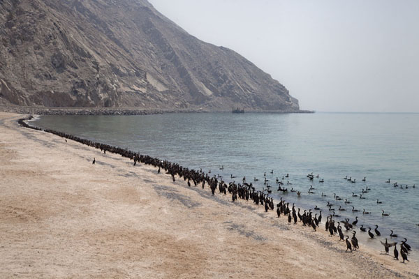 Beach on the west coast of Musandam peninsula with cormorants at the surf | Musandam Coastline | Oman