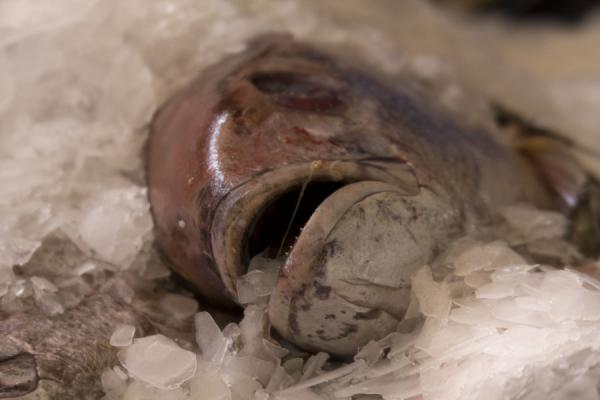 Foto de Fish on the ice at the fishmarket of MutrahMutrah - Oman
