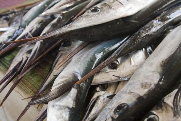 Foto de Fish at the fishmarket of MutrahMutrah - Oman