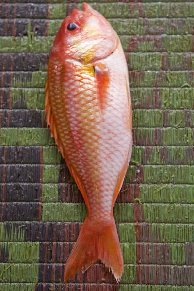 Red fish for sale | Mutrah Fish Suq | Oman