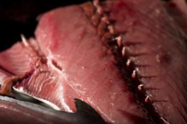 Close-up of a fish | Mutrah Fish Suq | Oman