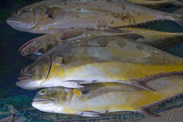 Fish for sale | Mutrah Fish Suq | Oman