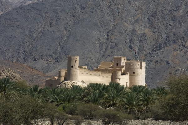 Picture of Nakhal Fort (Oman): The fort rising above the surrounding palm trees