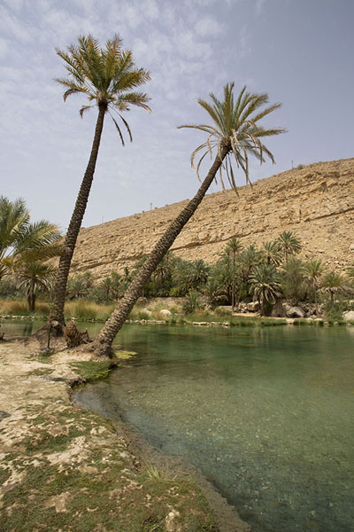 Palm trees standing at the shore of the pool in the wadi | Wadi Bani Khalid | 阿曼