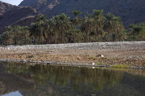 Palm trees reflected in water in Wadi Mayh | Wadi Mayh | Oman