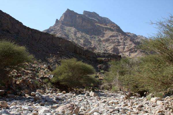 Riverbed with stones and trees with mountain in the background | Wadi Mayh | Oman