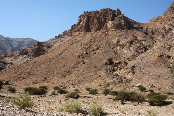 Picture of Trees and mountains in Wadi Mayh