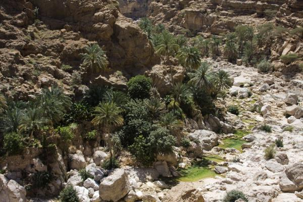 Photo de Oman (View of Wadi Shab from above, with palm trees and small green pools)