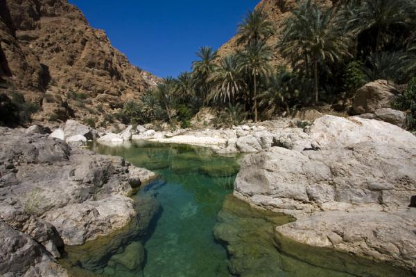 Picture of Wadi Shab (Oman): Palm trees and emerald pool in the upper part of Wadi Shab