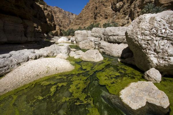 Clear water with green plants in Wadi Shab | Wadi Shab | Oman