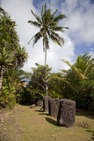 Picture of Badralchau monoliths (Palau): Row of monoliths under a tall palm tree