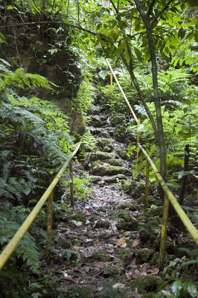 The rocky steps trail leading to the quarry of stone money | Metuker Ra Bisech stone money quarry | Palau