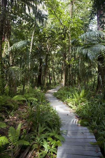 Picture of Ngardmau waterfall (Palau): Boardwalk in the forest near Ngardmau waterfall