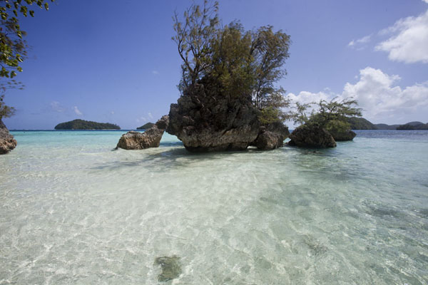 Photo de Rock with tree sticking out of the turquoise watersRock Islands - Palaos
