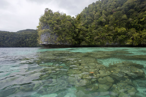Picture of Coral heads in the translucent sea between some of the rock islandsRock Islands - Palau