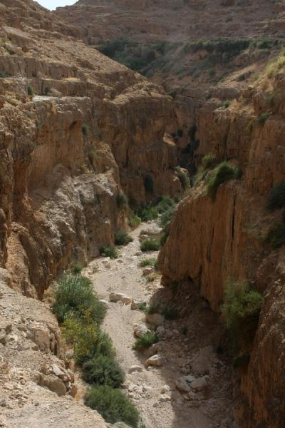 Some sparse bushes growing on the riverbed of Wadi Qelt | Wadi Qelt | Palestinian Territories