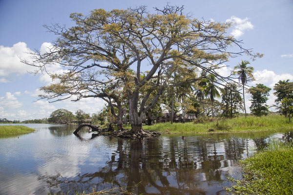 Tree reflected in the water of the lake at Angoram | Angoram | Papua New Guinea