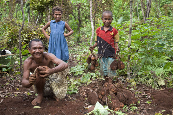 Foto van Family on a yam field at harvest time - Papoea Nieuw Guinea - Oceanië