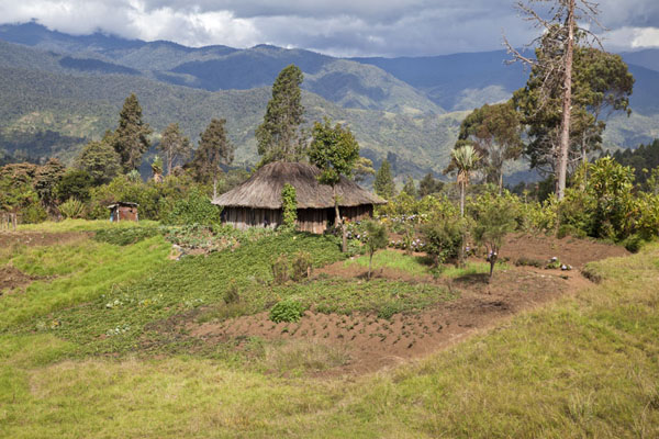 Picture of Most houses around Keglsugl are surrounded by fields where inhabitants grow cropsKeglsugl - Papua New Guinea