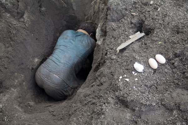 Gatherer digging deep into the volcanic ash in search for megapode eggs | Matupit megapode egg gatherers | 巴布亚新畿内亚
