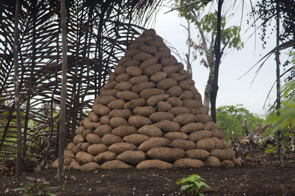 Foto de Yams neatly piled up just outside the villageOkaiboma - Papúa Nueva Guinea