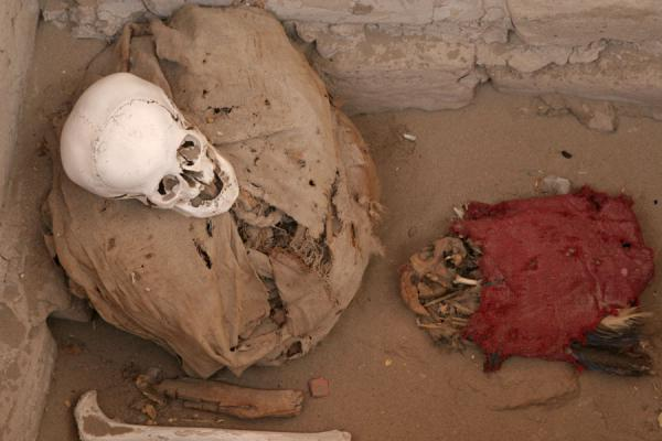Remains of Nazcan and a parrot | Chauchilla cemetery | Peru