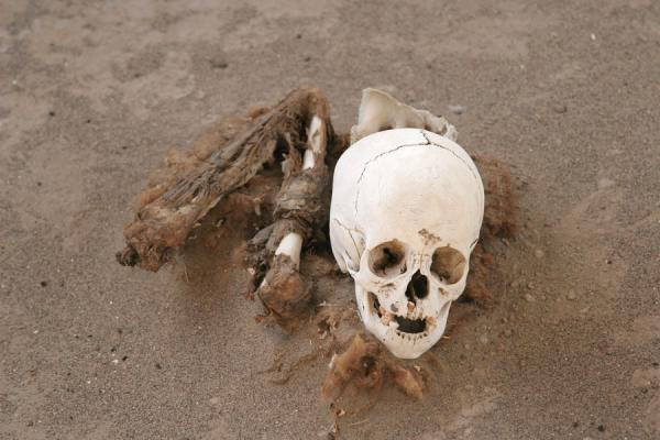 Picture of Dry sand preserved this skull very well - Peru - Americas