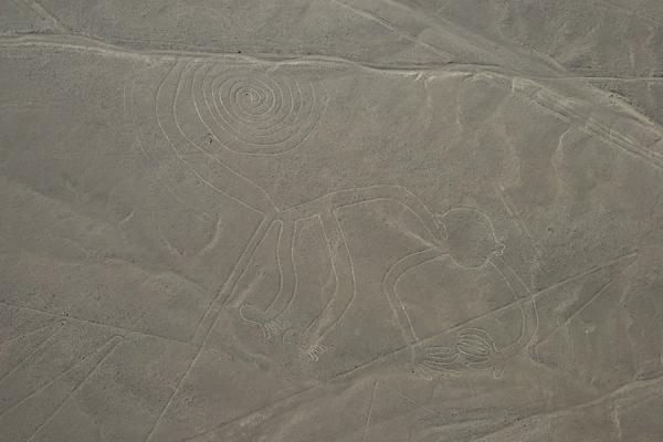 Spiral tailed Monkey depicted in the desert of Nazca | Nazca lines | Peru