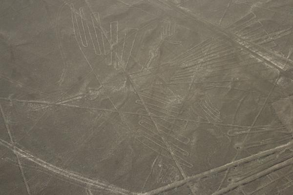 Picture of Nazca lines (Peru): One of the most elaborate figures in the Nazca desert: the Condor