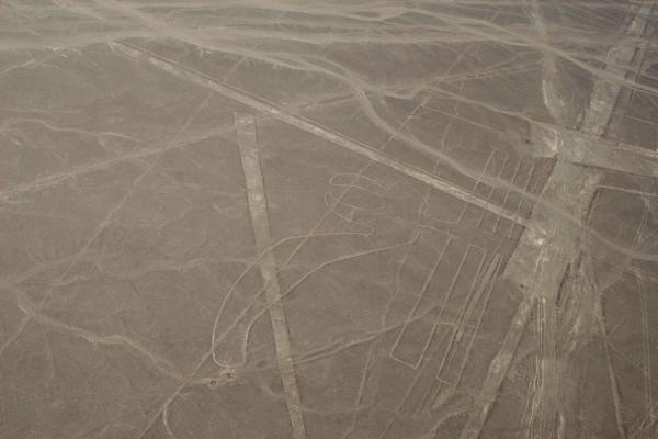 Picture of Nazca lines (Peru): Among the straight lines, you can see a Parrot here