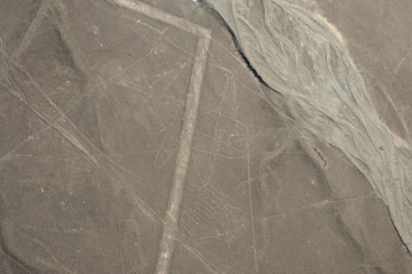 Picture of Nazca lines (Peru): Whale, lines and dry riverbed: typical scene of the Nazca lines
