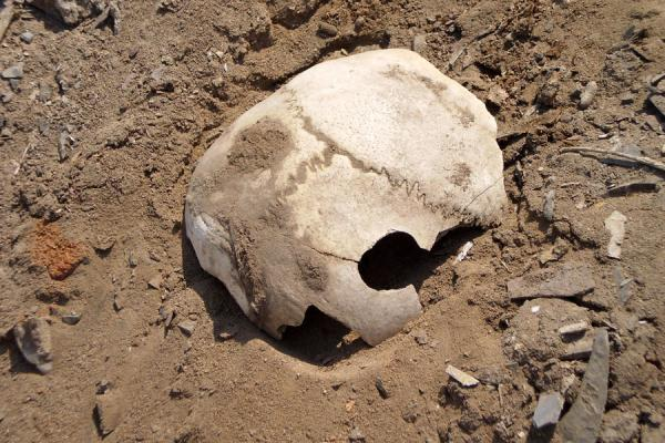 Part of a human skull near the ruins of Pachacamac | Pachacamac | Peru