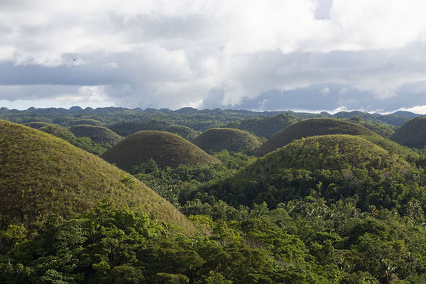 Foto di View over the curiously shaped Chocolate Hills - Filippine - Asia