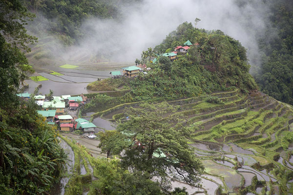 Fog rising behind a hill with rice paddies near Batad | Arrozales de Ifugao | Filipinas