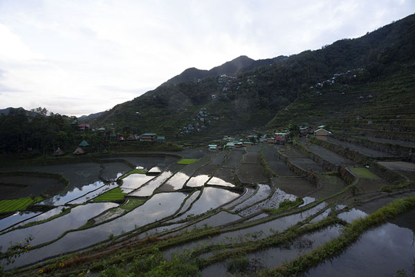 Dusk at the rice paddies of Batad | Rizières Ifugao | Philippines