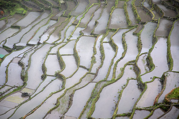 Rice paddy after rice paddy on the steep mountain slopes near Batad | Ifugao rice terraces | Philippines