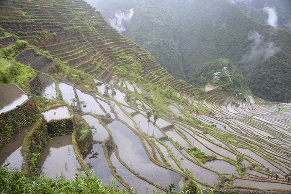 Rice paddies on the steep slopes of mountains around Batad | Ifugao rice terraces | Philippines