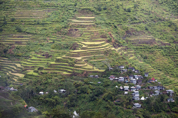 Hill with man-made landscape of rice paddies at Cambulo | Ifugao rice terraces | Philippines