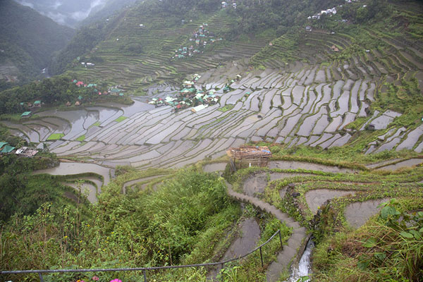 The rice paddies around Batad | Ifugao rice terraces | 非律賓